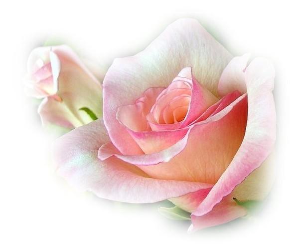 PSP tubo de flor