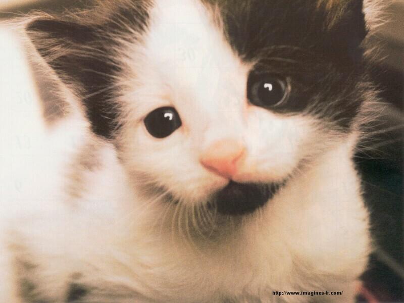 5c78fbeff3842 vous aimez les chats